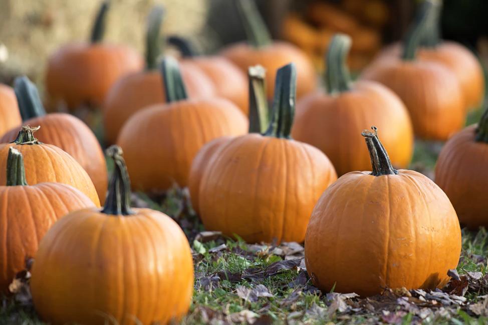 Food Feature: Pumpkins!